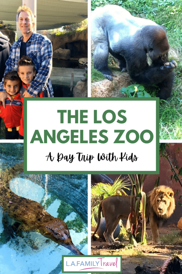 The Los Angeles Zoo is a perfect place to visit with kids of all ages. From babies, toddlers, big boys and teens, there is something to learn for everyone. Use this guide to make the most of your time visiting the L.A. Zoo with your family.