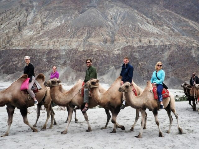 Double_Hump_camels_Nubra_Ladakh - volunteer family tourism in India