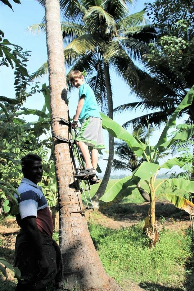 climbing_a_coconut_tree in kerala south india - volunteer family tourism in India