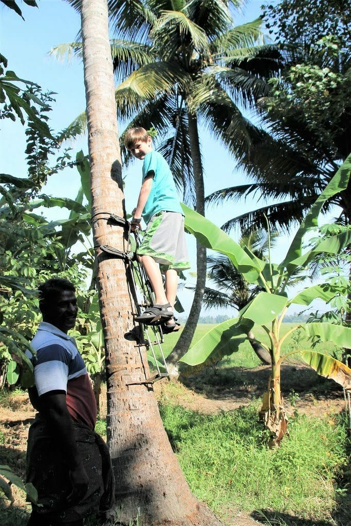 climbing_a_coconut_tree in kerala south india