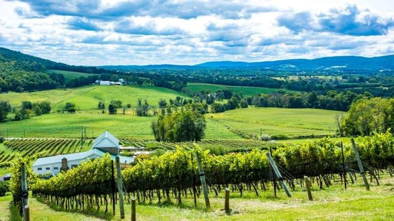 purcerville wine tasting