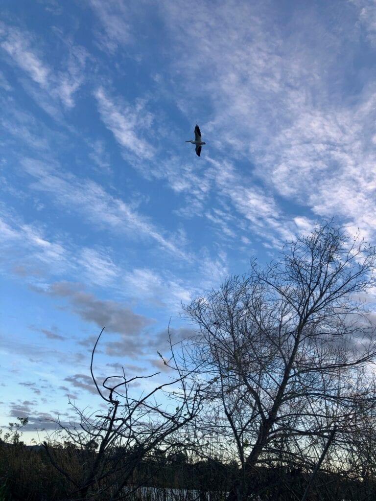 San Joaquin Marsh and Wildlife Sanctuary