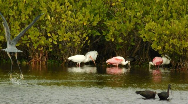 Seeing animals in Florida