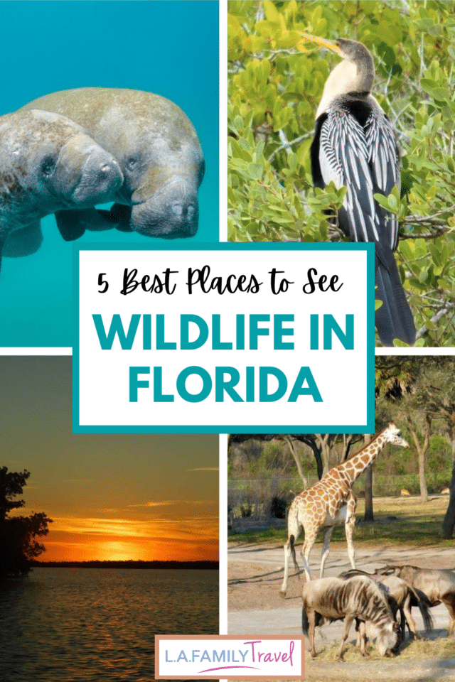 Here are the best places to see wildlife in Florida with your kids or your friends. It's a great itinerary for a couple's trip or a girl's getaway. See ocean life and animals roaming in their natural habitat.