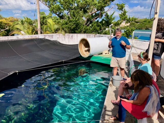 things to do with kids in bermuda