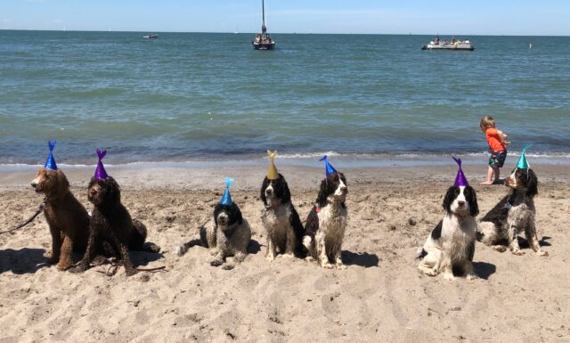 Dogs, Beach, Birthday
