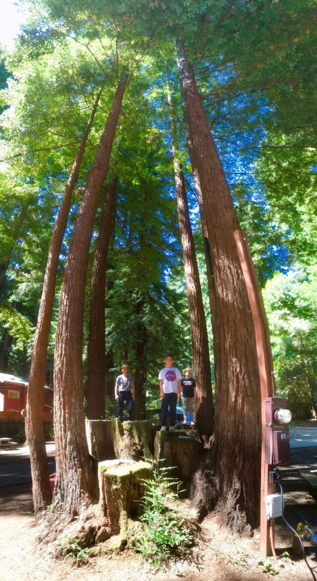 Santa Cruz Redwoods RV Resort: Things to do for families