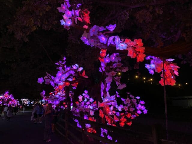 Picture of flower lanterns