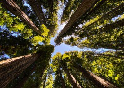 A Walk In The Redwoods: Family Activities at the Santa Cruz Redwoods RV Resort