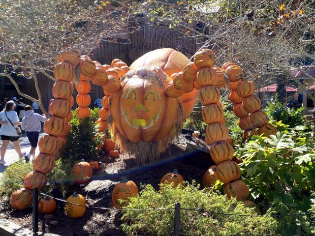 Photo of Spider made of pumpkins