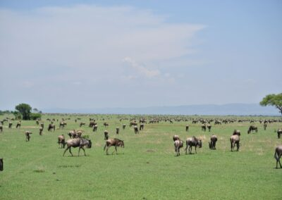7 Can't Miss Tips For Your Family African Safari