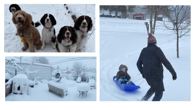 Photos of Snowy Days