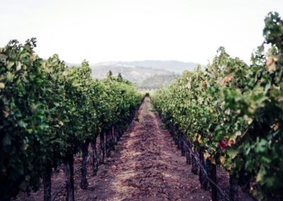 Fun Things To Do for Parents, Kids and Dogs in CA Wine Country
