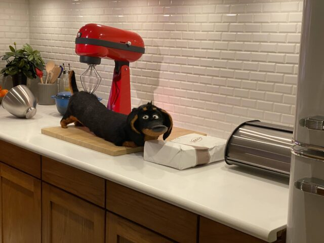 Buddy the dachshund gets a kitchen counter massage courtesy of a stand mixer - Photo by