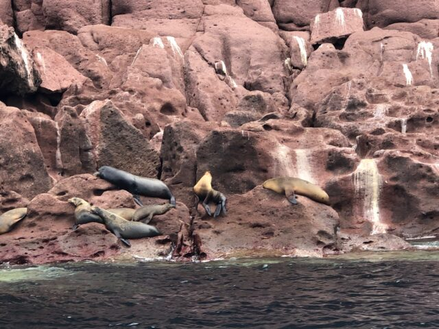 sea lions on island - things to do in cabo san lucas with kids