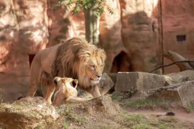 lions - The beautiful coastal city of Santa Barbara has lots of fun adult activities but there is a lot of fun to be had in Santa Barbara with kids!