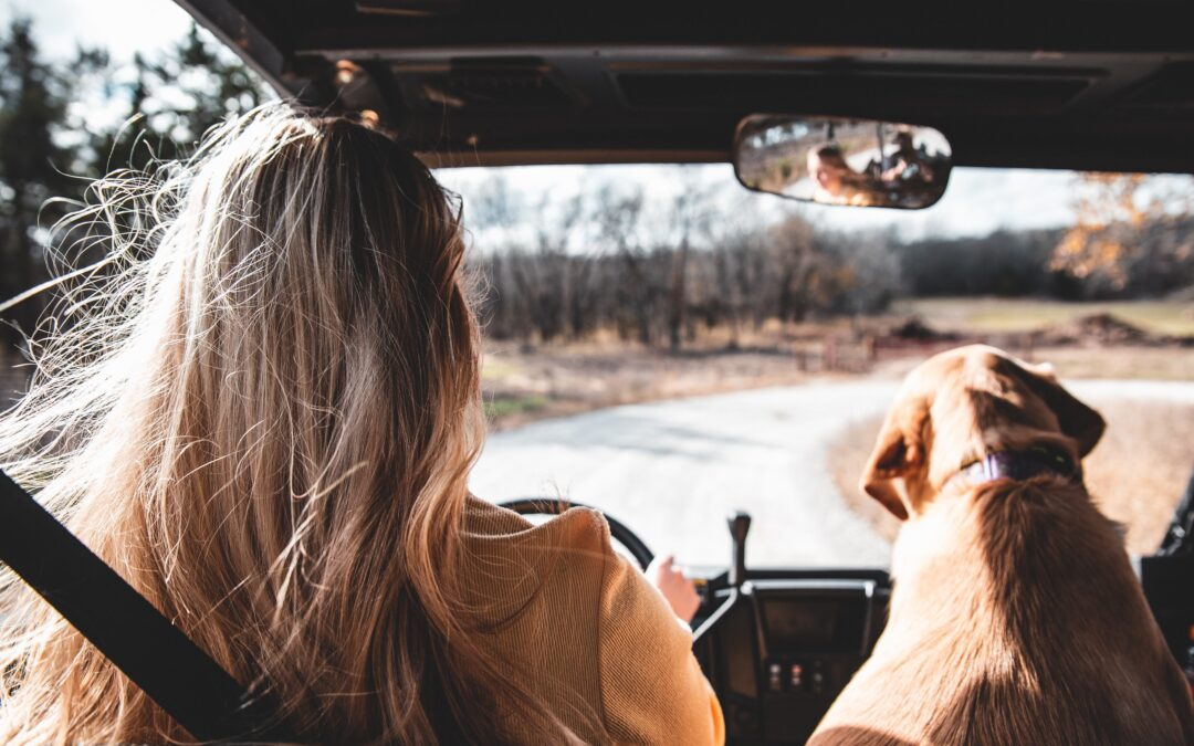 Best Road Trip Ideas With A Toddler and 2 Dogs