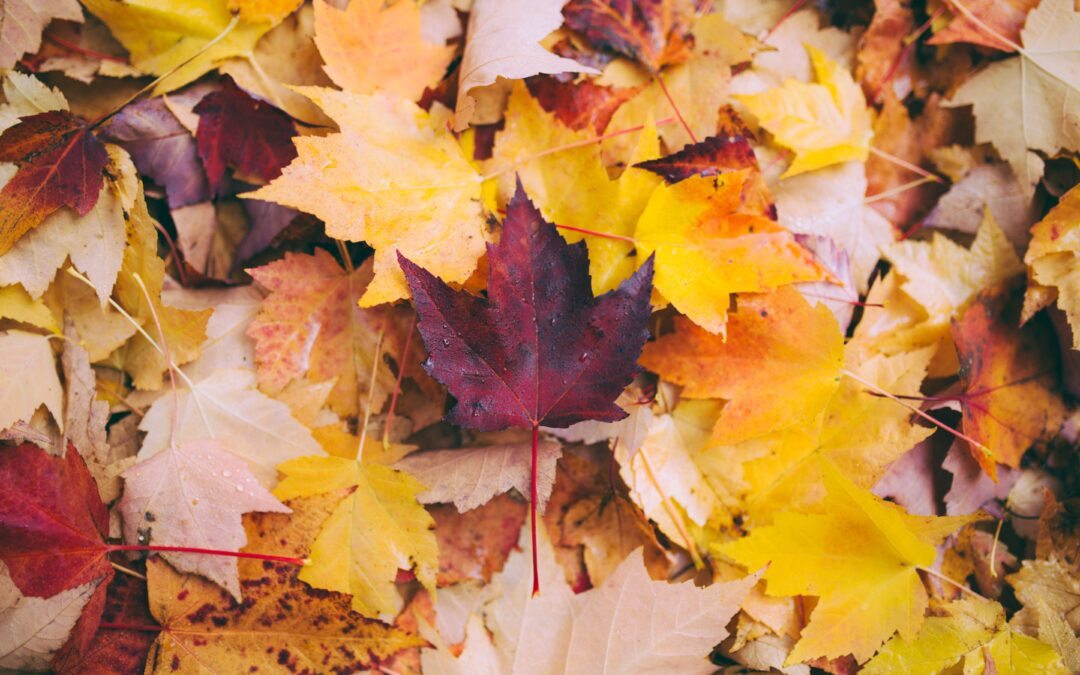 Fall in Denver: 5 Best Things To Do With Kids
